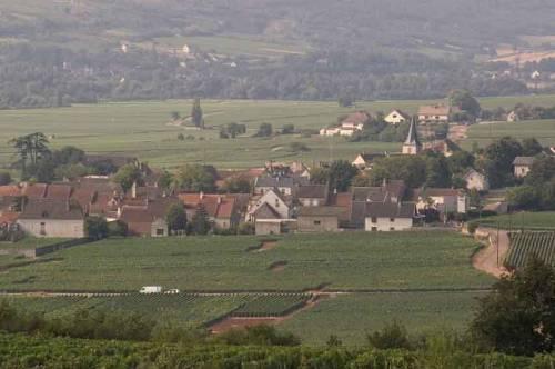 Chassagne-Montrachet_0005.jpg