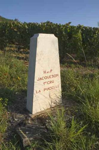 Jacquesons_parcel_of_La_Pucelle_vineyard@Rully_2863.jpg