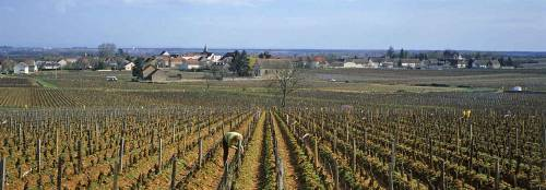 Puligny_from_ClavaillonLeflaive_1_9.jpg